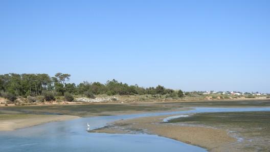 Tidal pond at low tide in 2017