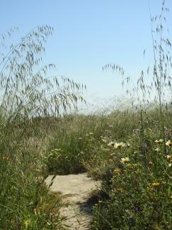 Paths through the dunes