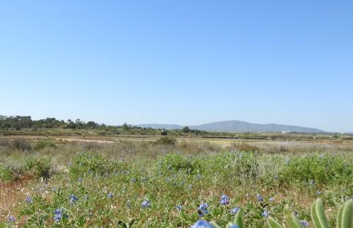 Inland views