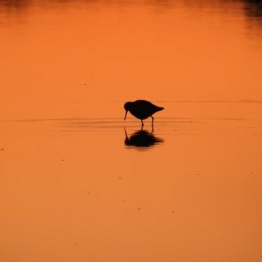 Wader in orange