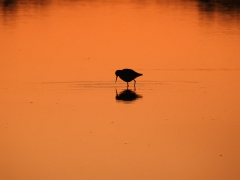 Wader in orange