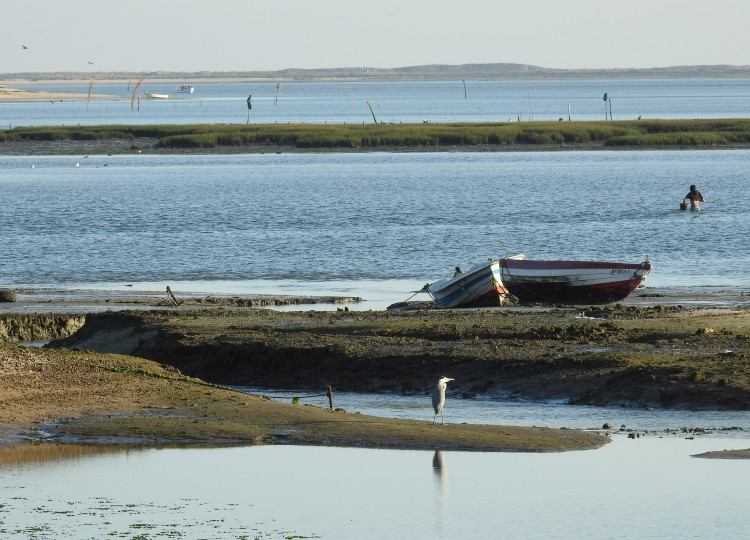 Ria Formosa mudflats and lagoons