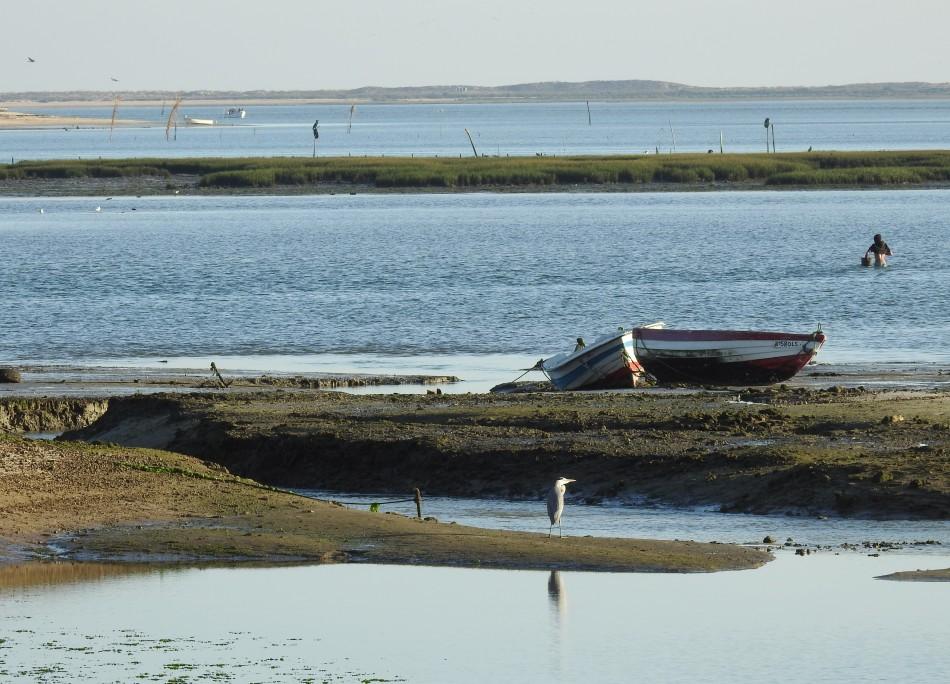 Ria Formosa mudflats and lagoons