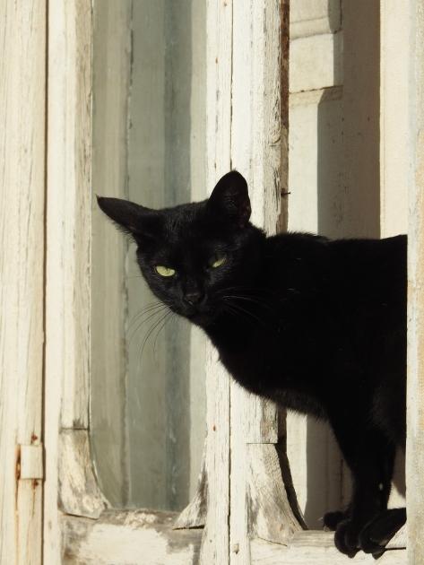 Gato em Olhão