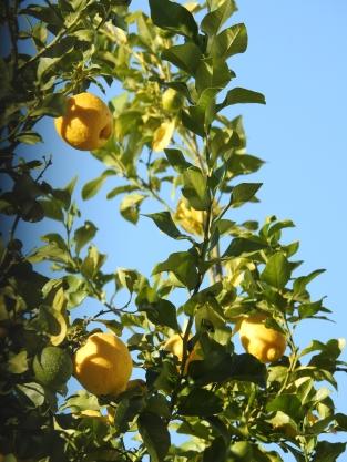and lemons too