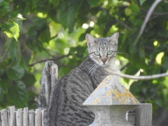 Perching on a fence