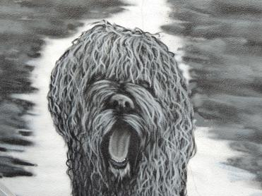 Another Portuguese water dog