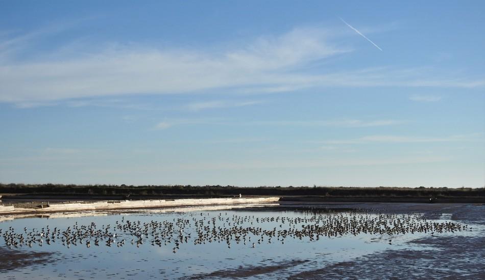 Roosting Waders in the Saltpan