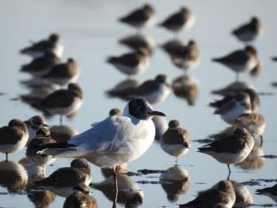 One legged roost