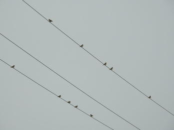 Larks on a wire