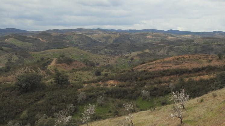 Forever hills