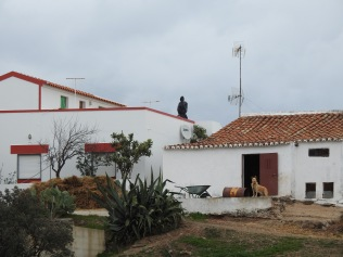 Being watched in Amendoeira