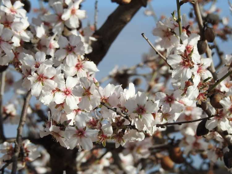 Can you smell the Almond Blossom?