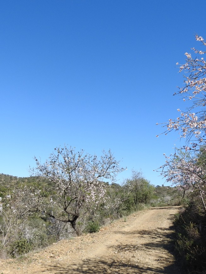 Walking through Almond orchards