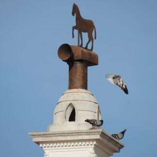 Feral pigeons in Estoi