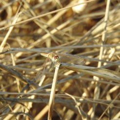 Could be part of the dried grass