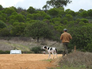 Winning dog checking out the course prior to his heat