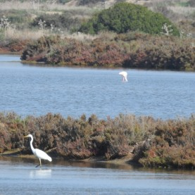 And yes that is a flamingo in the next pond!