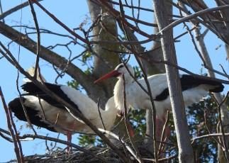 Storks!