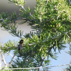 Yet to be identified bee and fly!