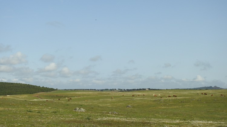 The steppe in Alentejo