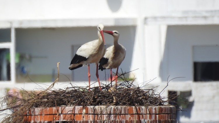 Happy storks