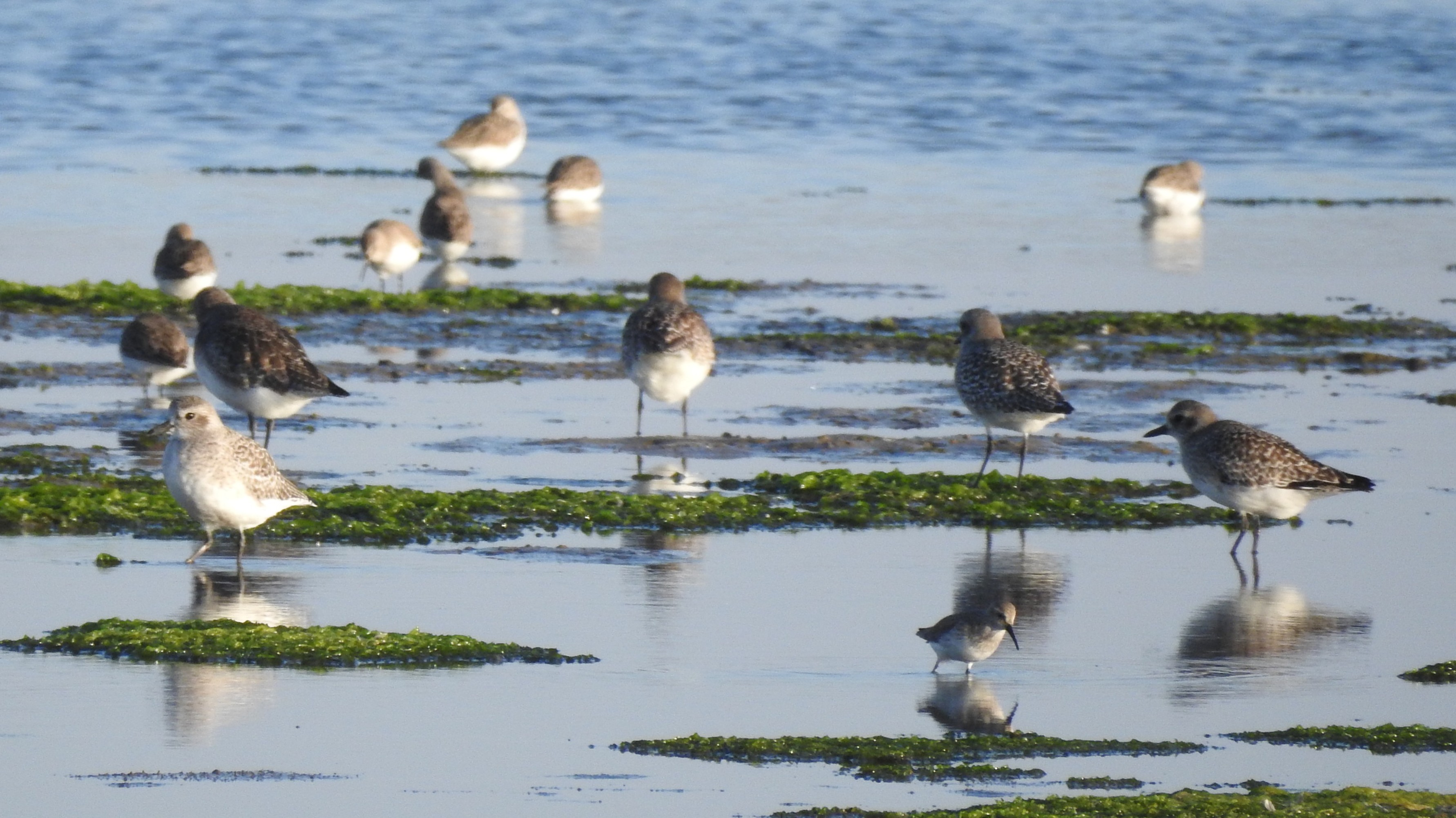 A spotlight on waders